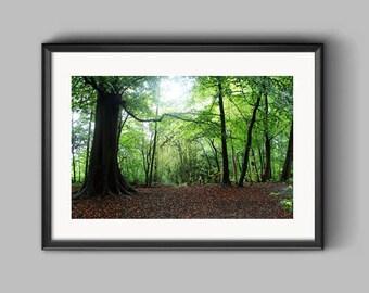 Big Wood, Erddig, an Erddig Countrypark Woodland in the Spring Landscape Photograph.