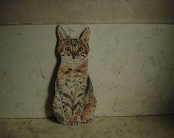 real Abyssinian cat