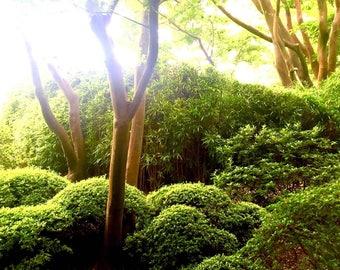Trees in the Tea Garden