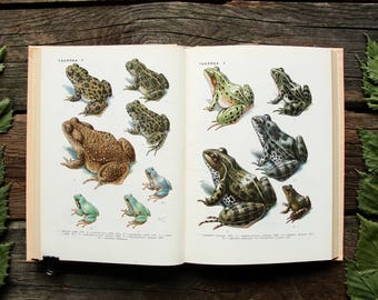 Amphibians and Reptiles - 32 Beautiful Color Plates - Hardcover -- Vintage Animal Book, 1971. Frog Lizard Snake Turtle Illustration Print