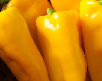 Yellow Long Sweet pepper 450 seeds,organic yellow long peppers seeds,non gmo ,greek traditional seeds 2.5gr Approx 450seeds
