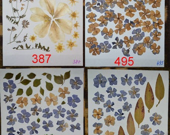 Pressed flowers, dried flowers, pressed petals, vintage colors, Oshibana supplies #387 #495 #248 #249