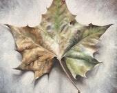 Leaf Print, Leaf Wall Art...