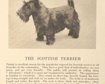 1930's Scottish Terrier Dog Magazine Photo & Article Christmas Gift!