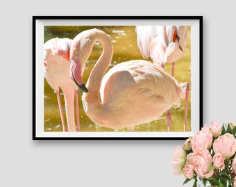 Tropical Wall Art Decor Flamingos Print Flock of Birds Modern Colour Photography Printable Instant Download Kids Room