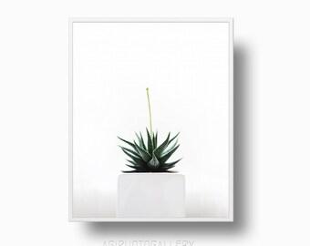 Minimalist Cacti print, cactus print, Cactus Plant, minimalist print, Cacti, cacti printable instant download,