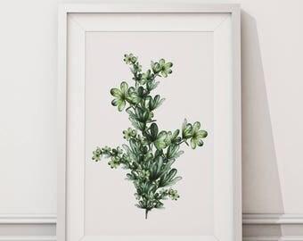 Botanical Leaf Print No.7 on Watercolour Paper - Fine Art Print of a Leaf Watercolour Painting