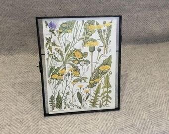 Vintage framed botanical drawing, flower illustrations, botanical print, floral, in glass frame, Green leaves Yellow Dandelions