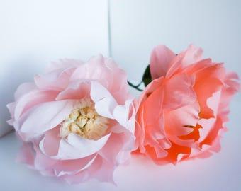 Peony : Bright Coral | Blush Pink