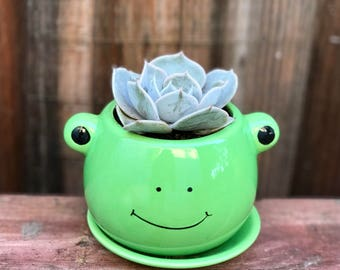 Cute ceramic FROG succulent planter (PLANT INCLUDED) - Adorable animal planter