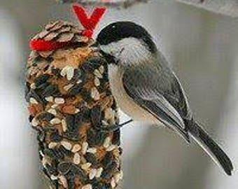 DIY Birdseeded Pinecone Treats