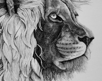 Lion Pen & Ink Print