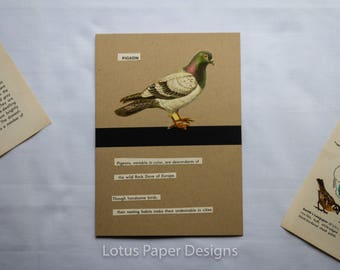Handmade Blank Greeting Card (Folded A6) - Pigeon - Golden Guide to BIRDS