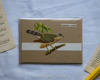 Handmade Blank Greeting Card (4-Bar) - Cooper's Hawk - Golden Guide to BIRDS
