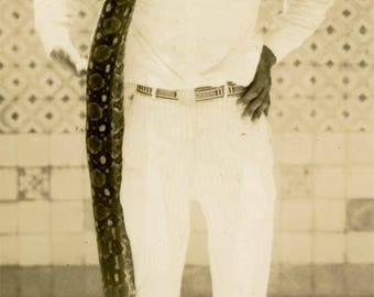 vintage photo 1940 Young Tan Man Wrapped in Reticulated Python Snake