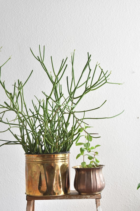 medium size solid brass planter flower pot
