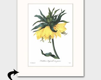 Yellow Flower Art w/Mat (Exotic Cottage Room Wall Decor, Gift for Her) Matted Redoute Botanical Print