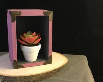 Rainbow Succulent: Shadow Box