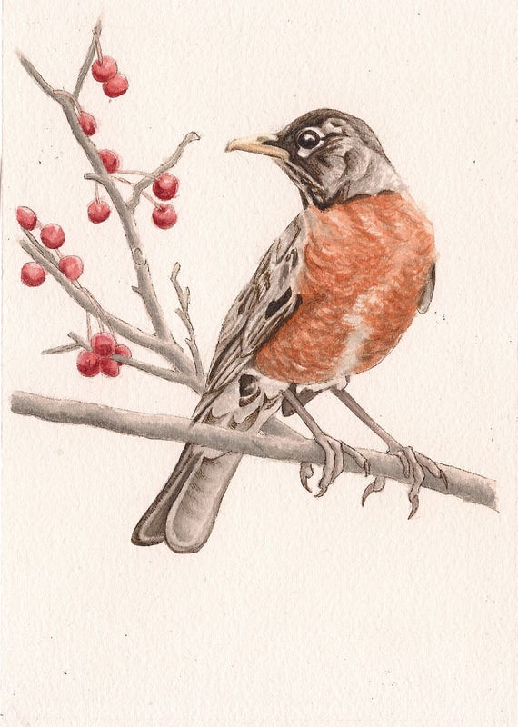 """Robin Bird - Print of Original Art 5"""" x 7"""" watercolor and ink Giclee archival"""