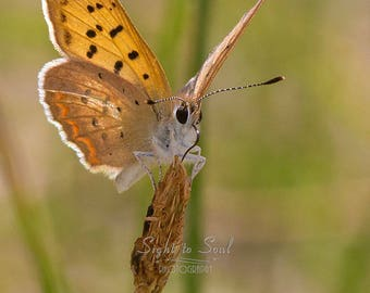 Orange Butterfly Wall Art, Nature Photography, Butterfly Photo, Macro Photography Print