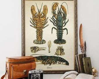 Natural History Print Home Decor, Lobster Print Crustacean Giclee, Lobster Illustrastion Nautical Art Decorative Sea Life Reproduction SL021