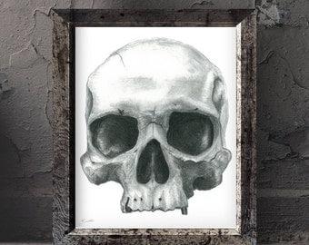 "Gothic skull print, anatomical skull charcoal drawing 8x10"""