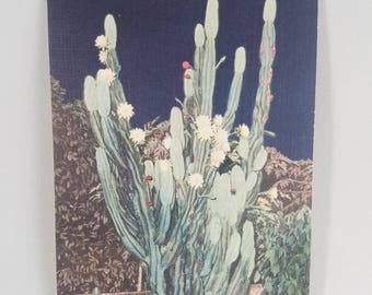 Vintage Linen Postcard -  Miami, Florida |  Night Blooming Cereus Flowers  |  Colored Botanical Illustration  | Uncirculated/Not Postmarked