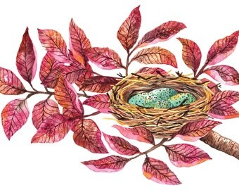 Nest with blue eggs tree nature illustration