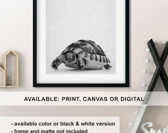 Turtle print, Turtle wall art, Turtle baby gifts, Turtle baby decor, Turtle nursery, Nursery animal art, Animal wall decor Print/Canvas/Digi