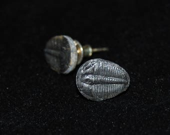 Small Trilobite Earrings with Sterling Silver Posts