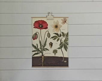 Vintage Botanical Scroll- Poppy (Wall Hanging, HOME DECOR)