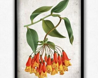 Yellow and Red Flowers Vintage Print - Flower Poster - Flower Art - Flower Picture - Home Decor - Home Art - Living Room - Living Room Art