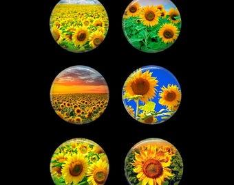 Sunflower Button Pins or Sunflower Magnets Sunflower Refrigerator Magnets Sunflower Decor