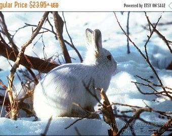 20% Off Sale - Poster, Many Sizes Available; Arctic Hare