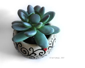 Swirly Green Faux Succulent, blue, plant