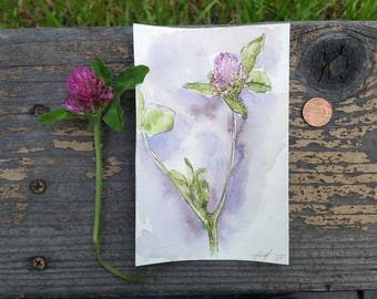 "Original Watercolor of Wild Clover aka Trifolium longipes , botanical illustration, botanical art, floral art, herb art - 4 x 6"""