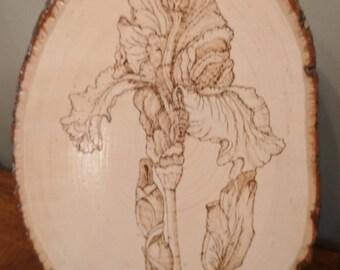 Wood burned iris wall hanging