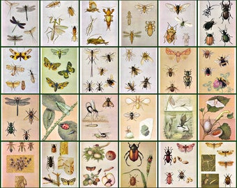 Insects. For the Young Entomologist. Set of  32. Soviet Postcards. Artist Aristov. Moscow, 1988
