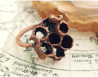 Wasp nest ring, electroformed honeycomb beehive bee bug insect science biology earth teacher jewelry vulture culture