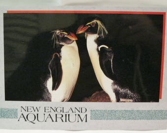New England Aquarium Boston MA Postcard