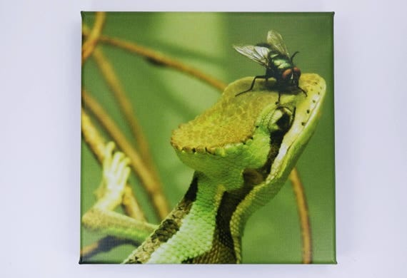 Picture Crowns Basilisk in green with fly-gecko-lizard-photography art print on canvas 20 x 20 cm print-Wall decoration art