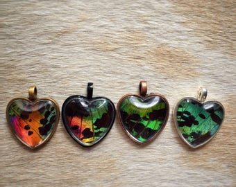 Custom Butterfly Heart Necklace // Sweetheart Necklace // Real Butterfly // Madagascan Sunset Moth // Sunset Moth Pendant // Urania Ripheus