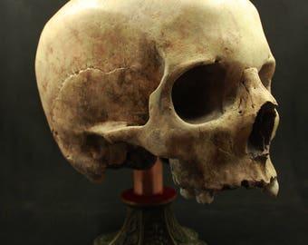 Base for skull exposition