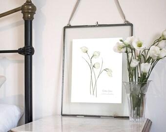 Cotton Grass, Botanical Wildflower Watercolour, Art Print