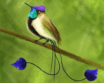 Marvelous Spatuletail, Hummingbird