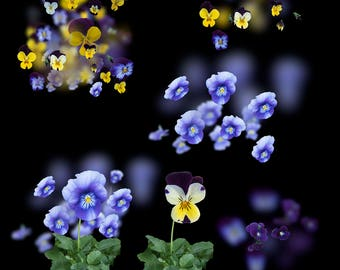 30 Flower Overlays for photography
