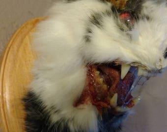 Taxidermy zombie Jackalope.evil bunny monster