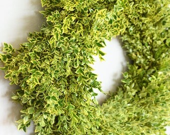 English Boxwood Wreath | Front Door Wreath | Summer Wreath | Front Door Wreath | Summer Wreaths for Front Door | Housewarming Gift Ideas