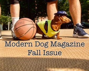 Modern Dog Magazine Fall Issue