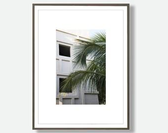 Tropical Photograhy, Tropical Leaf Art, Palm Leaf Photo, Mexican Print, Printable Leaf, Large Poster, Tropical Leaf, Feliss-Art